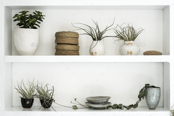 Selection of air plants in terracotta pots and a String of Hearts plant on shelves in a plant shop. - Stock Photo - Images
