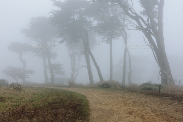 Dense fog among cypress trees, road in foreground, near Historic Pierce Point Ranch, Point Reyes - Stock Photo - Images