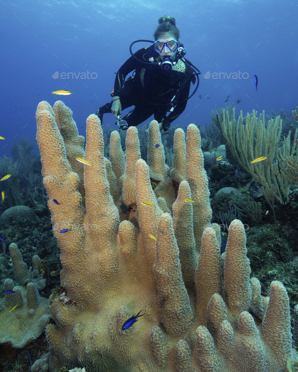 Reef scene with scuba diver swimming over a  Pillar coral. - Stock Photo - Images