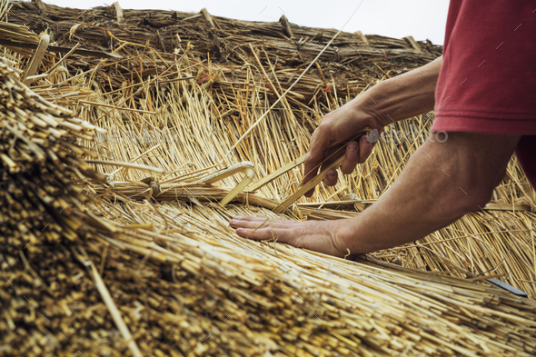 Thatcher standing on a roof, fastening straw at a seam. - Stock Photo - Images