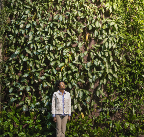 A woman looking up at a high wall covered in climbing plants and foliage. - Stock Photo - Images