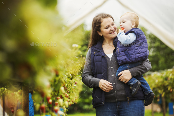 An adult woman and a toddler, mother and son in a polytunnel among soft fruit bushes picking and - Stock Photo - Images
