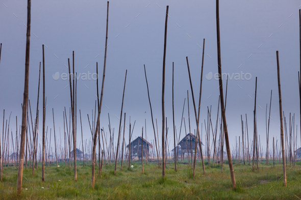 The marshes of Inle Lake, Myanmar. Small houses on stilts, and tall poles upright in the marsh - Stock Photo - Images