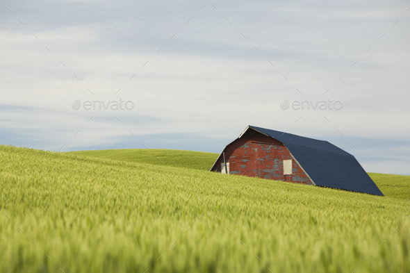 35323 - Stock Photo - Images