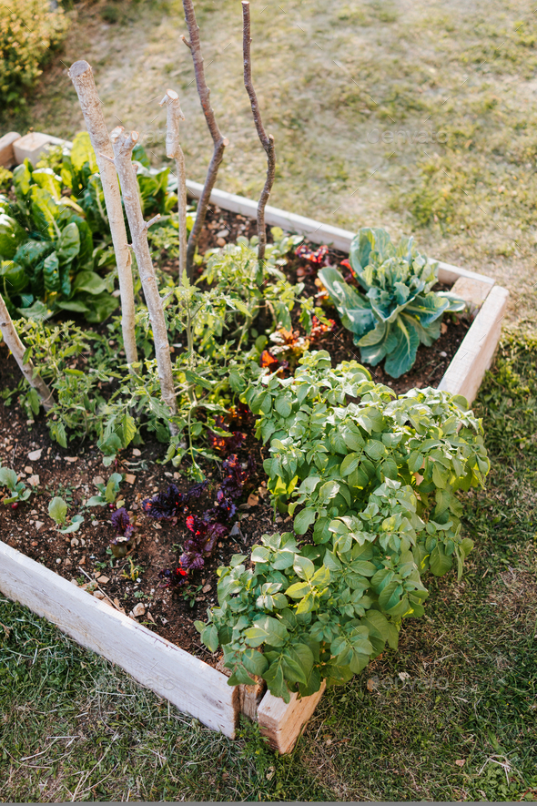Raised vegetable bed - Stock Photo - Images