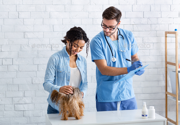 Time to visit vet. African American woman with dog consulting pet doctor in hospital - Stock Photo - Images