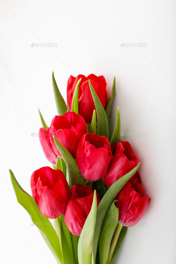 Red tulips bouquet isolated on white background - Stock Photo - Images