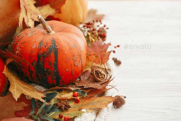 Happy Thanksgiving. Pumpkins with fall leaves - Stock Photo - Images