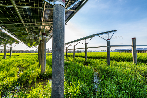 Solar power plant - Stock Photo - Images