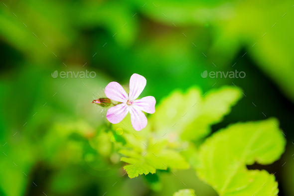 Fresh growing small tender garden flowers on a blurred green leaves background in a summer day - Stock Photo - Images