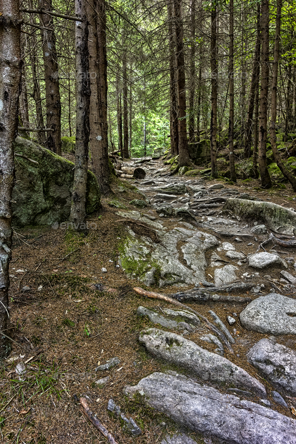 rocky walkway - Stock Photo - Images