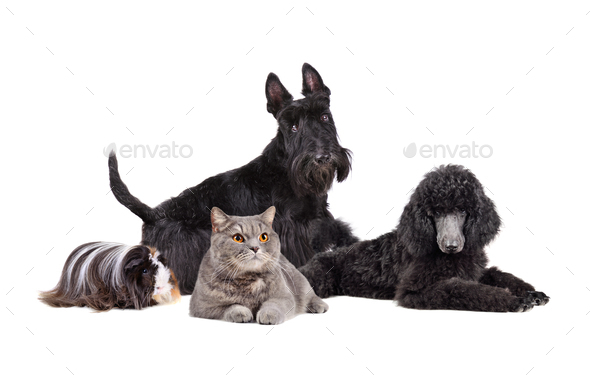 Group of different pets - Stock Photo - Images