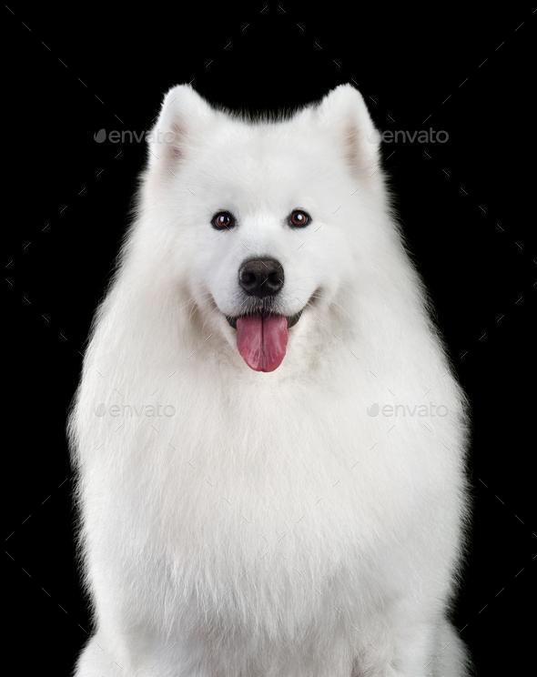 Beautiful dog - Stock Photo - Images