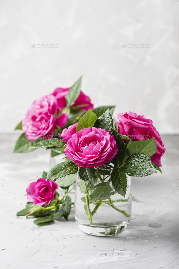 Amazing wild pink roses - Stock Photo - Images