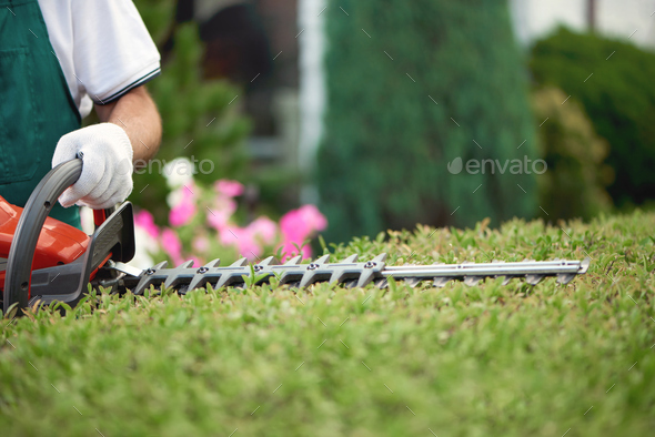 Close up of gargener trimming bushes - Stock Photo - Images