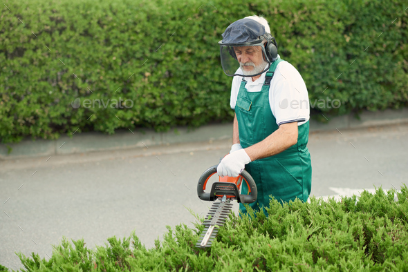 Man wearing ear and face protection cutting bushes - Stock Photo - Images