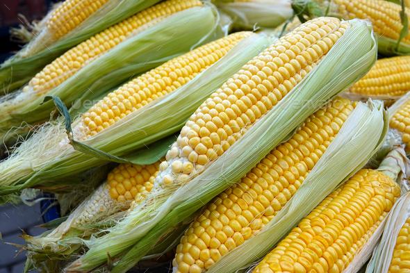 Organic Raw Vegetable Corn - Stock Photo - Images