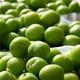 Organic Fruit Plum - PhotoDune Item for Sale
