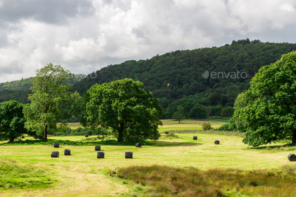 Picturesque Meadow View during Harvest Season in Lake District, - Stock Photo - Images