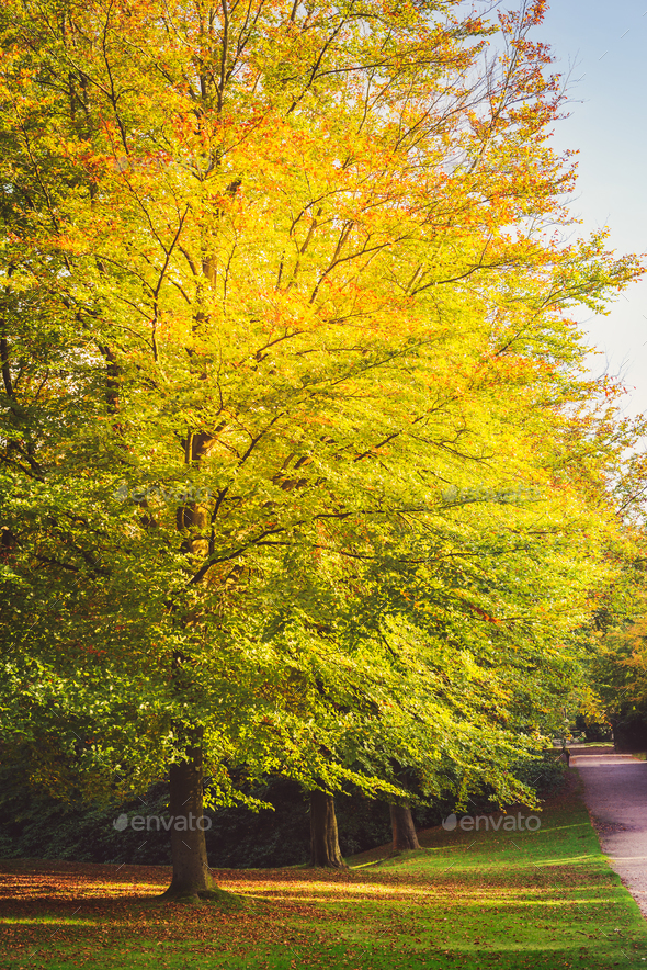 Beautiful English Public Garden during Fall Season, England, UK - Stock Photo - Images