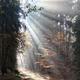 God beams - sunbeams in the morning forest - PhotoDune Item for Sale