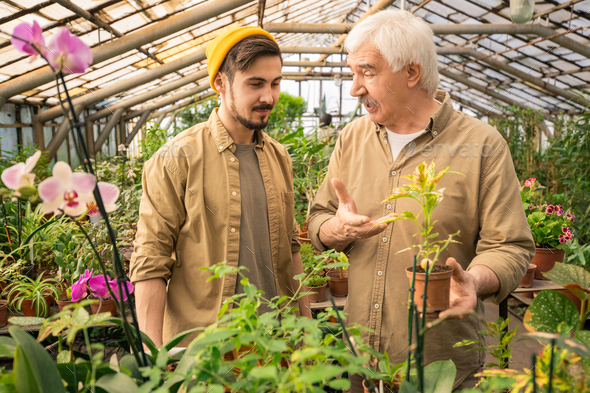Teaching son to grow plants in greenhouse - Stock Photo - Images