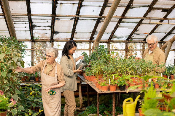 Greenhouse workers being responsible for daily care of plants - Stock Photo - Images