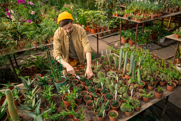 Taking care of greenhouse plants - Stock Photo - Images