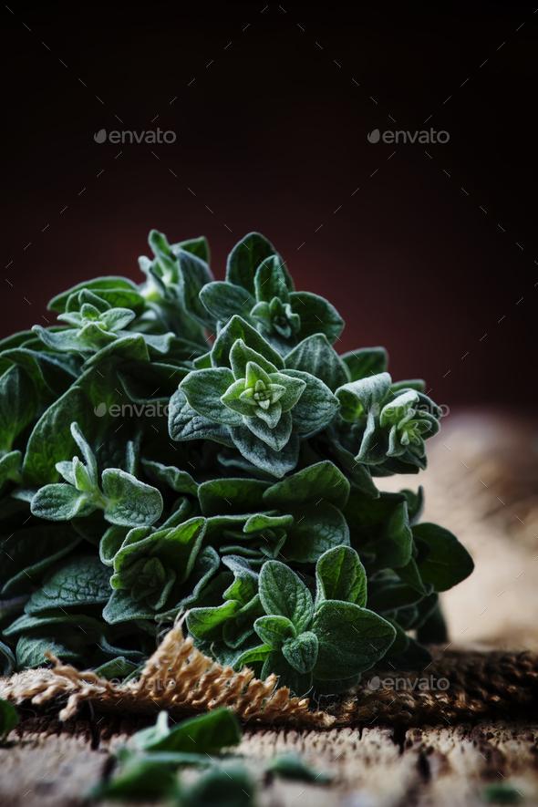 Fresh green oregano or Origanum vulgare in a beam - Stock Photo - Images