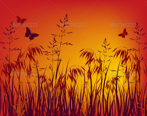 Sunset Background - Flowers & Plants Nature
