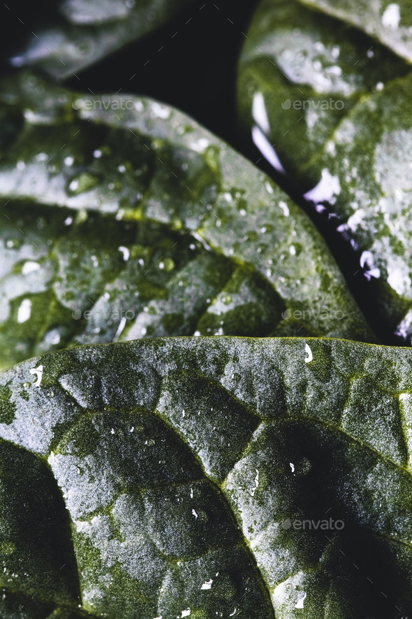 Macro photography of fresh spinach. Concept of organic food. healthy foods, vegan - Stock Photo - Images