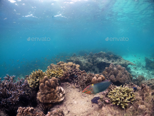 Underwater seascape of corals and algae in the ocean. - Stock Photo - Images