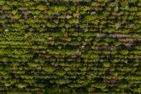 Top view of trees texture - Stock Photo - Images