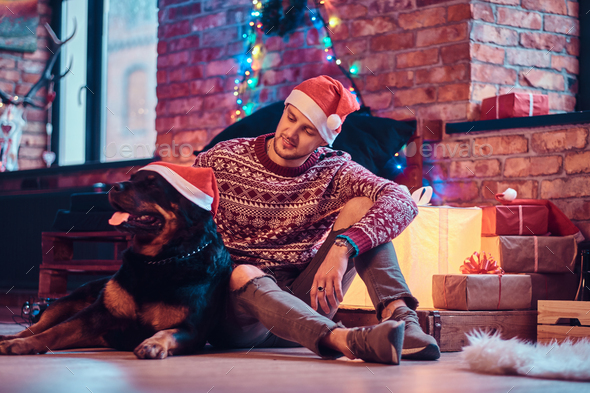 Young man sitting with his purebred rottweiler in a decorated living room at christmas time. - Stock Photo - Images