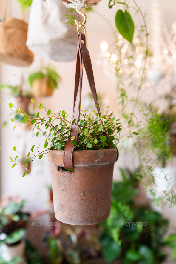 Pot with plant in a floral shop - Stock Photo - Images