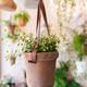 Pot with plant in a floral shop - PhotoDune Item for Sale