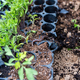 Red worm on young plants growing out of soil on the field. - PhotoDune Item for Sale