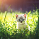 Small kitten with blue ayes in green grass - PhotoDune Item for Sale