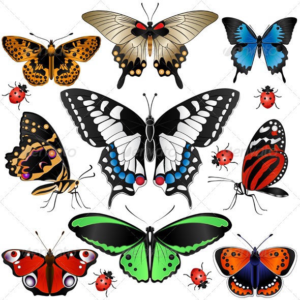Collection of Butterflies - Animals Characters