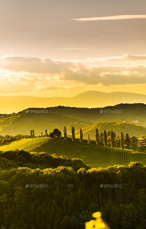 South styria vineyards landscape, near Gamlitz, Austria, Eckberg, Europe. Grape hills view from wine - Stock Photo - Images
