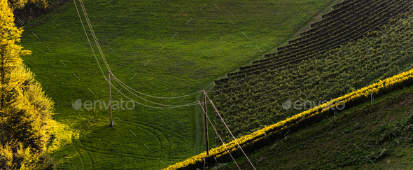 Rows Of Vineyard Grape Vines. Autumn Landscape. Austria south Styria . Abstract Background Of Autumn - Stock Photo - Images