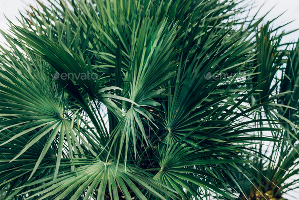 Palm trees, summer background - Stock Photo - Images