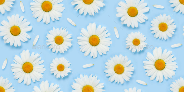 Camomile flower seamless texture - Stock Photo - Images