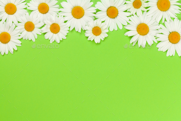 Camomile flower greeting card - Stock Photo - Images