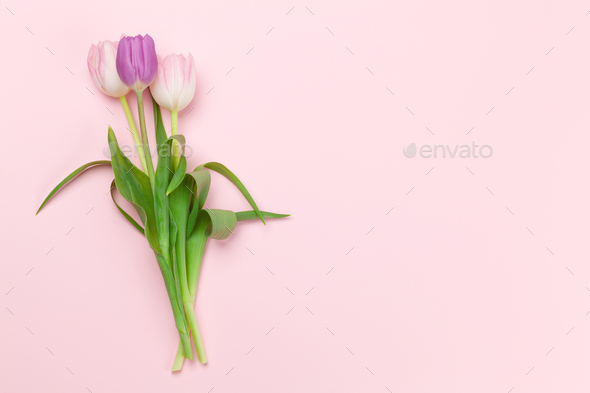 Pink tulips over pink background - Stock Photo - Images