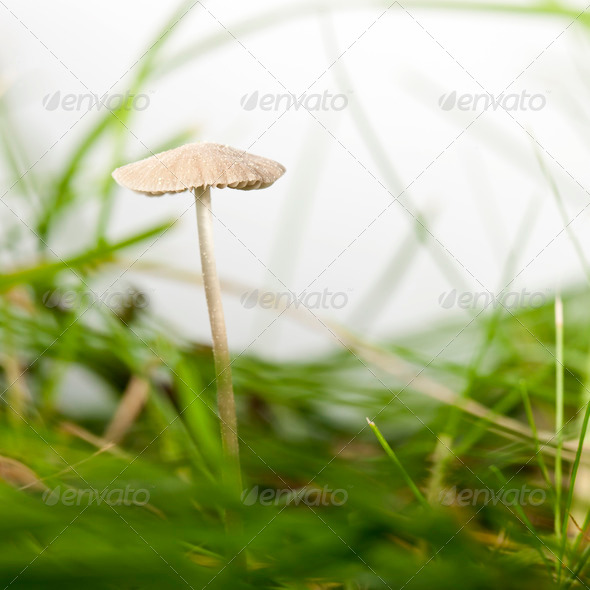 Mushroom in grass in front of white background - Stock Photo - Images