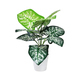 Plastic Potted Plant - PhotoDune Item for Sale