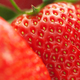 Macro of strawberry. - PhotoDune Item for Sale
