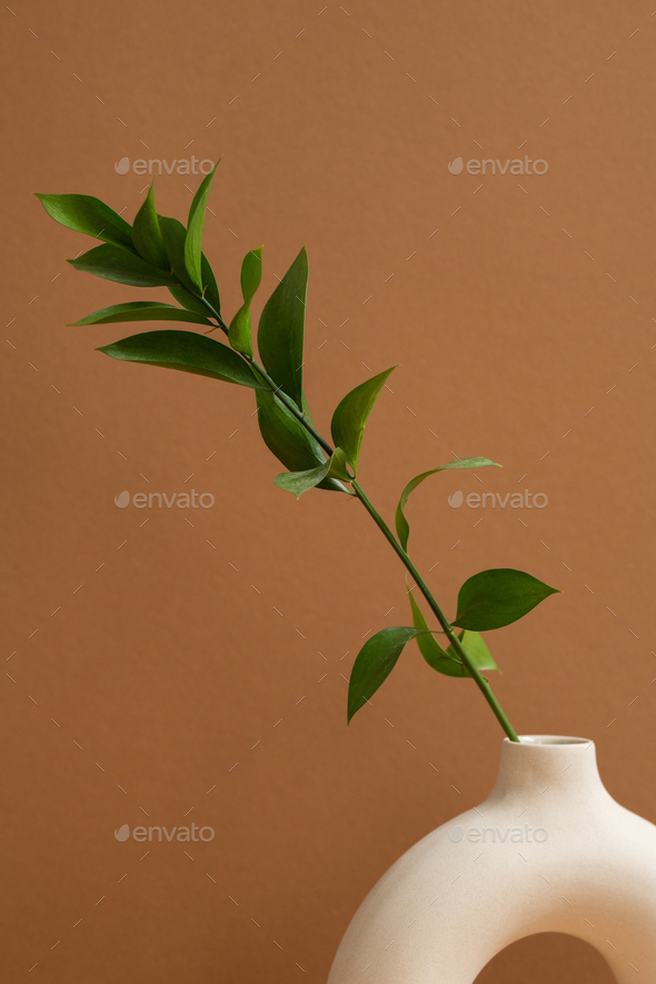 White ceramic ring shaped vase with green domestic plant with many leaves - Stock Photo - Images