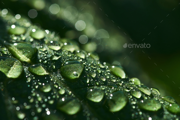 Close-up view of the raindrops on the green leaf - Stock Photo - Images